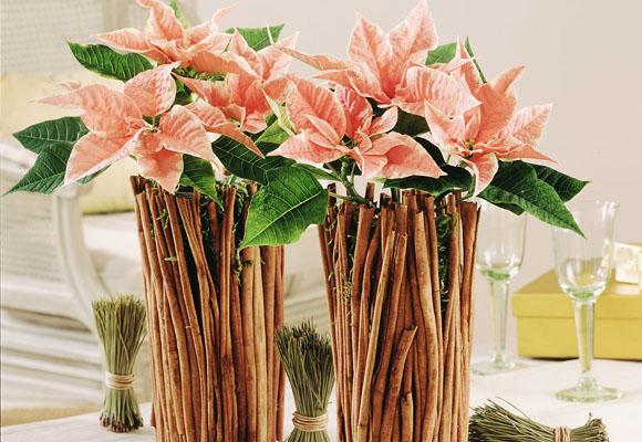 Centros de mesa de navidad. Flor de pascua