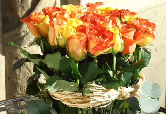 rosas de amor. Rosa roja: amor pasional, amor