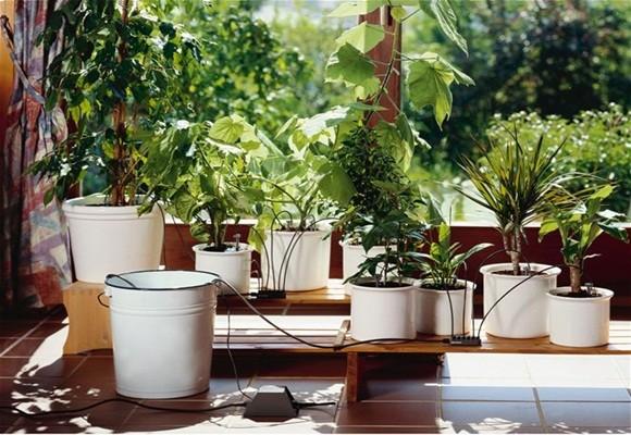 Imagen Mantener el jardín perfecto en verano