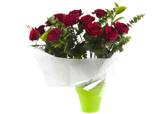 Imagen Rosas r