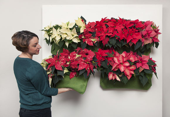 Un jardín vertical con Poinsettias